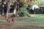 Geparden Fütterung