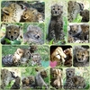 Im Geparden Nest
