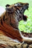 Im Tigerhaus 1
