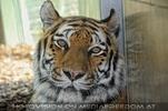 Im Tigerhaus 2