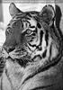 Im Tigerhaus 3