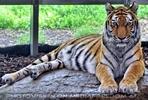 Im Tigerhaus 4