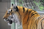 Im Tigerhaus 6