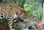 Jaguar Mama und ihr Baby