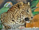 Jaguar mit Futter