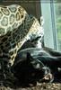Jaguar Wäsche
