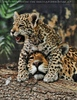 Jaguarbaby auf ihrer Mama