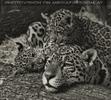 Jaguarbabys kuscheln