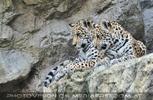 Leoparden Geschwister