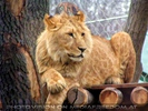 Löwen Platz