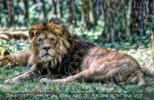 Löwenmärchen