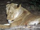 Wildlife and Nightlife - Pix 102