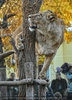 Löwin mit ihrem Baum
