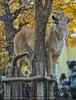 Löwin passt auf