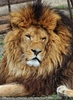 Mit den Löwen 03