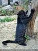 Panther Kratzbaum