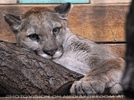 Puma 03