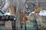 Löwen Ausguck