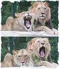 Löwengähne