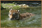 Tiger Boot