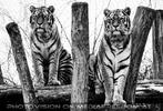 Sibirischer Tiger Winter 11