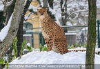 Gepard Ausguck