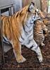 Tiger Babys 20