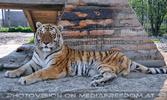 Tiger Rescue 11