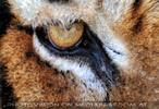 Tiger Rescue 22