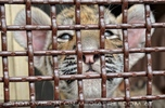 Tigerbaby Quarantäne 06