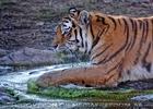 Tigerbad 02