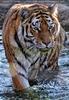 Tigerbad 04