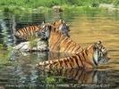 Tigerbad 2