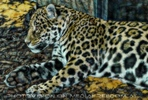 Vision Jaguar