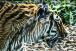 Vision of a Tiger