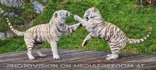 Tiger Tanz