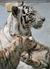 White Tiger Family 07