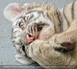 White Tiger Family 22