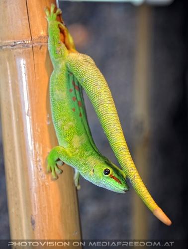 Aqua Zoo 03