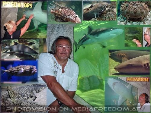 Predators Aquarium: Gabriele P.,Charly Swoboda