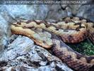 Schlangen 06