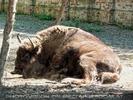 Am Hof 10 - Bison