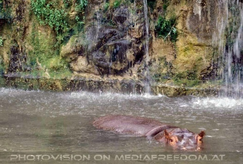 Safari 09: Flusspferde