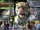 Tierische Fotografie