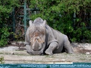 Nashorn döst