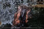 Flusspferde 6