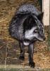 Die Tierretter von Aiderbichl 44