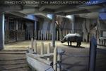 Im Nashorn Haus