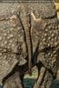 Nashorn Hinterteil