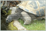 Schildkröten Trenke